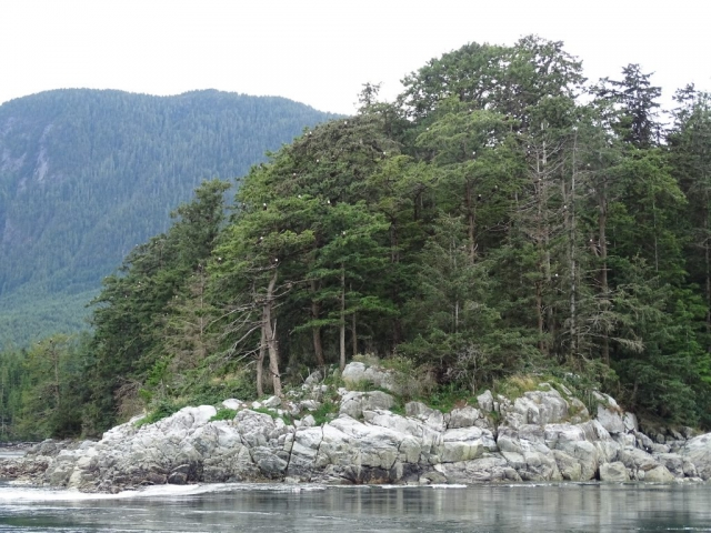 Bald eagles near Stuart Island, BC coast #olafincanada #britishcolumbia #discoverbc #wildlife #baldeagle #vancouverisland #campbellriver