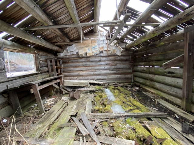 Inside the red, abandoned cabin on Clearwater Valley Road #olafincanada #britishcolumbia #discoverbc #abandonedbc #cabin #clearwater