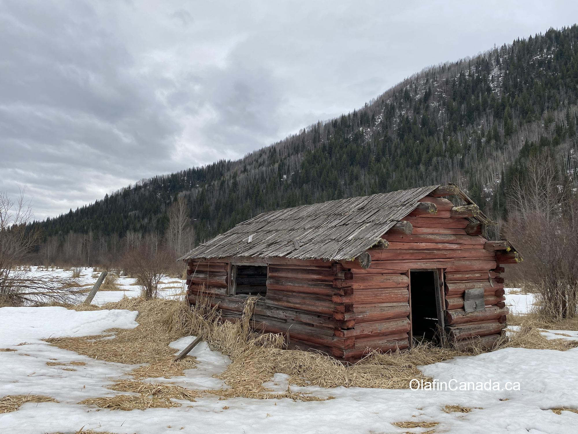 Old cabin near abandoned home on the Clearwater Valley Road in south Wells Gray Park #olafincanada #britishcolumbia #discoverbc #abandonedbc #cabin