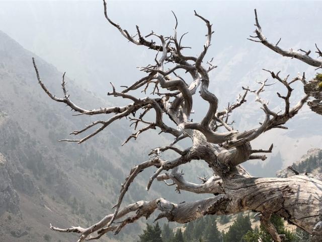 Warped tree roots near Fernie, BC #olafincanada #britishcolumbia #discoverbc #fernie