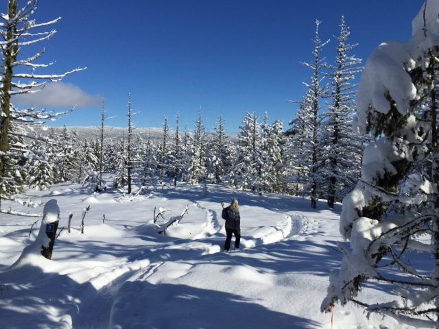 Snowshoeing on Crystal mountain #olafincanada #britishcolumbia #discoverbc #okanagan #westkelowna #snowshoeing #crystalmountain