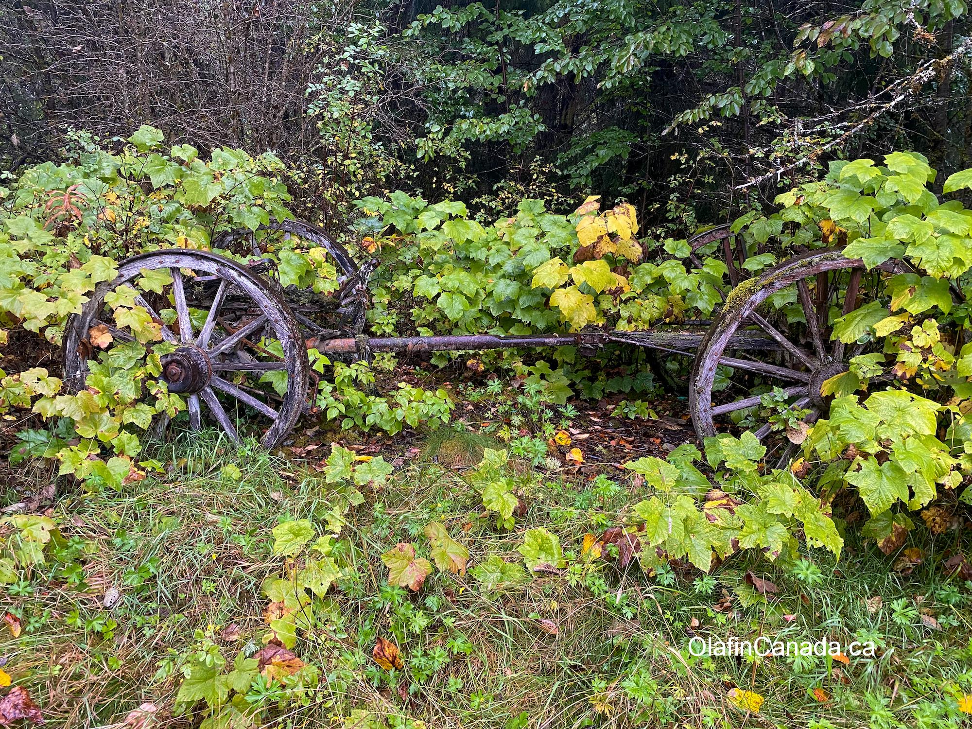 Old wagon wheels near home in Alice Arm. #olafincanada #britishcolumbia #discoverbc #abandonedbc #alicearm