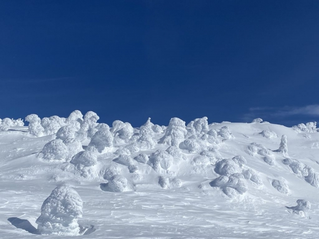 Snow ghosts against a blue sky in Big White #olafincanada #britishcolumbia #discoverbc #bigwhite #kelowna #sunshine #snowghosts