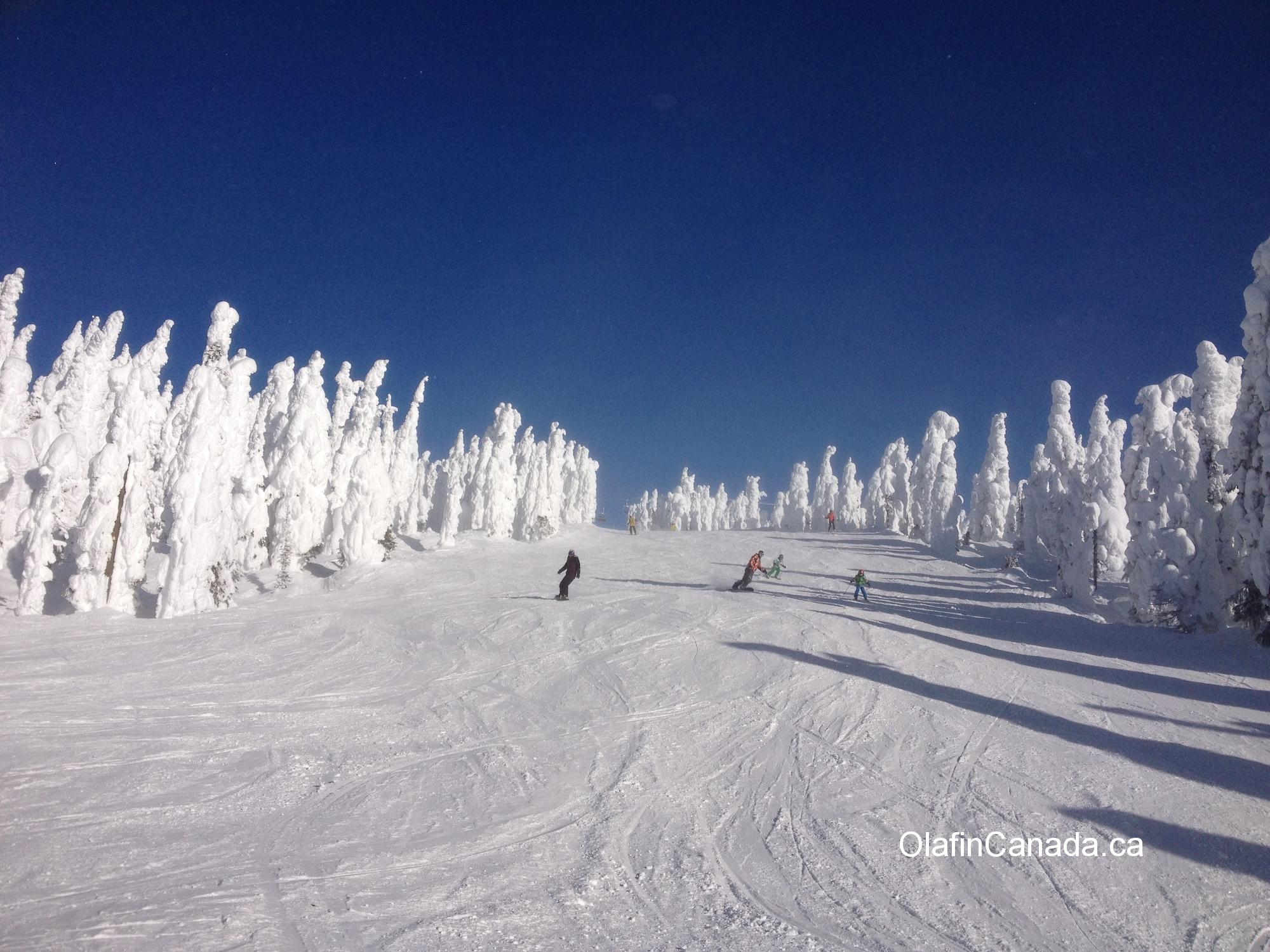 Skiing between the snow trees at Big White #olafincanada #britishcolumbia #discoverbc #bigwhite #kelowna #sunshine #snowghosts