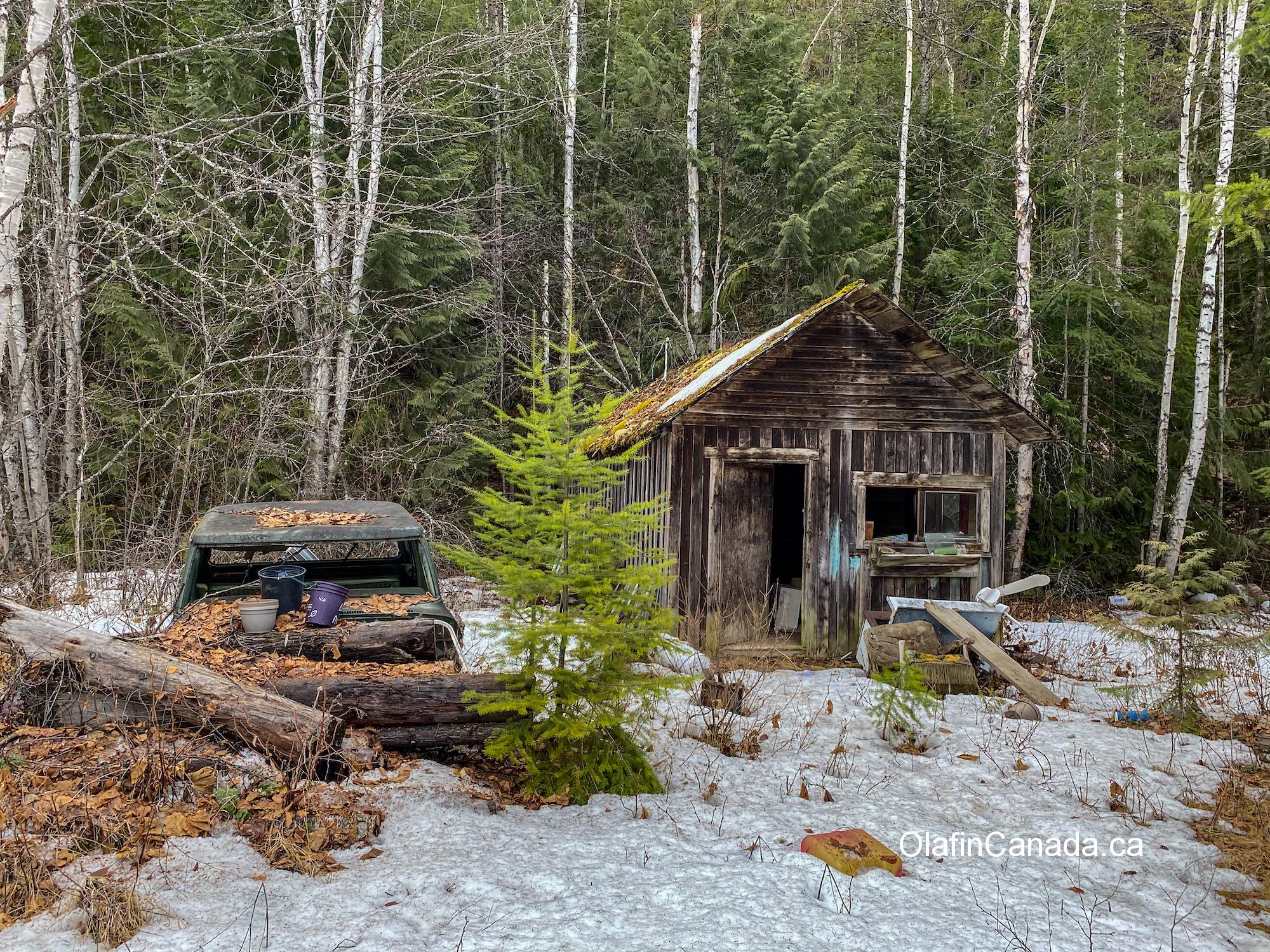 Abandoned old cabin on Stanley Flats in East Blackpool, near Clearwater #olafincanada #britishcolumbia #discoverbc #abandonedbc #cabin