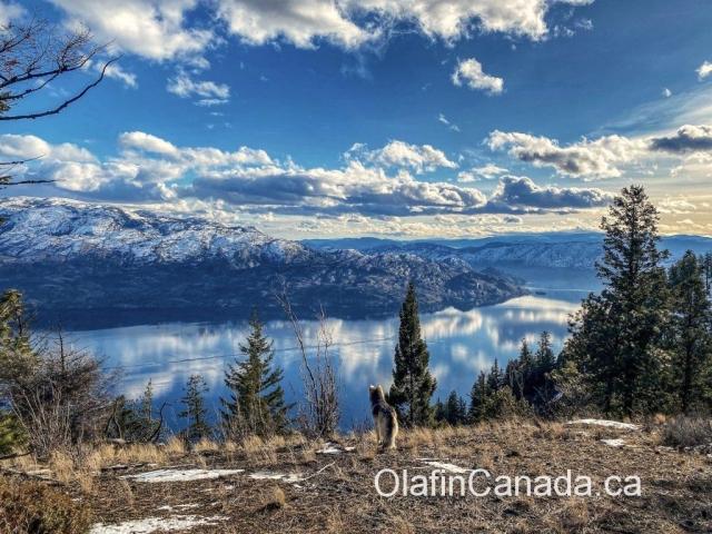 View over mirror-like Okanagan Lake in the Okanagan Valley #olafincanada #britishcolumbia #discoverbc #okanaganlake #westkelowna #sunshine