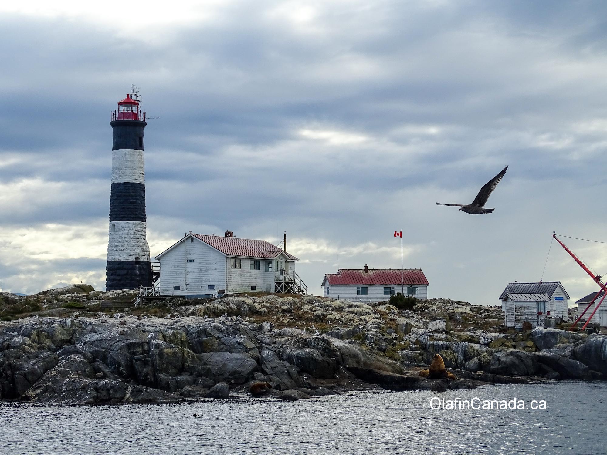 Lighthouse on research island near Victoria #olafincanada #britishcolumbia #discoverbc #victoria #lighthouse