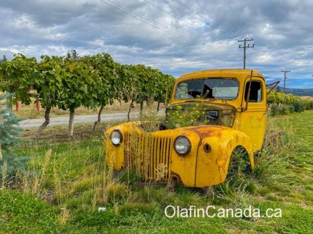 Yellow truck near vineyard in West Kelowna #olafincanada #britishcolumbia #discoverbc #abandonedbc #okanagan #westkelowna