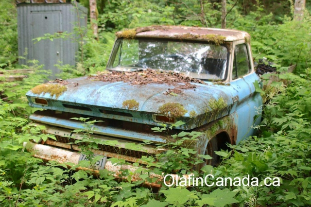 Chevrolet pick up from the 1960s in Alice Arm BC #olafincanada #britishcolumbia #discoverbc #abandonedbc #alicearm #pickup #truck