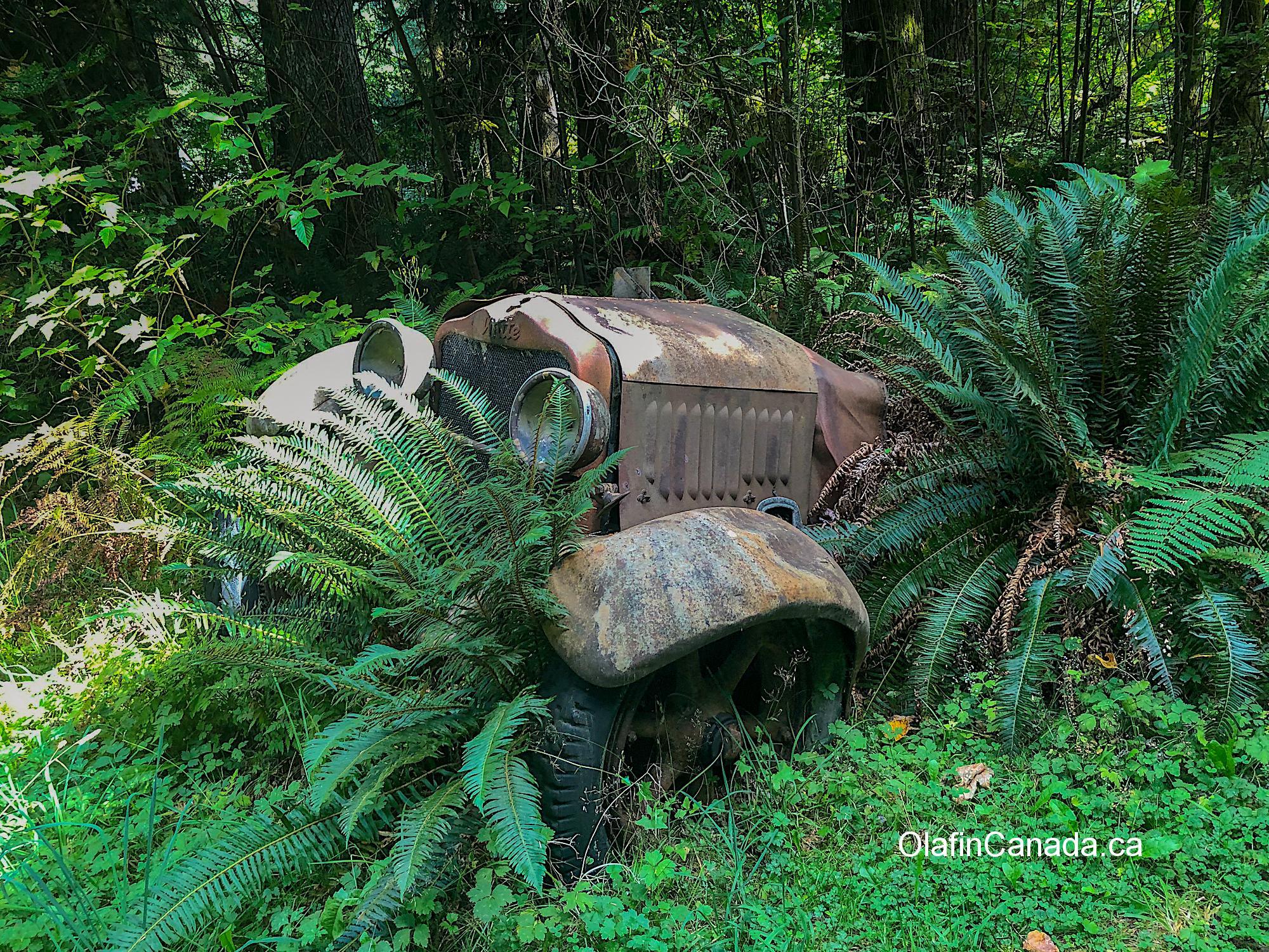 Old car near Sayward junction Vancouver Island #olafincanada #britishcolumbia #discoverbc #abandonedbc #vancouverisland #car